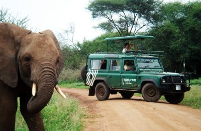 safari with elephant