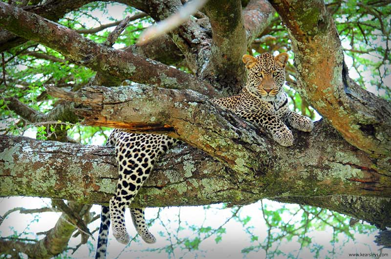 November in Tanzania – An Unexpected Treat