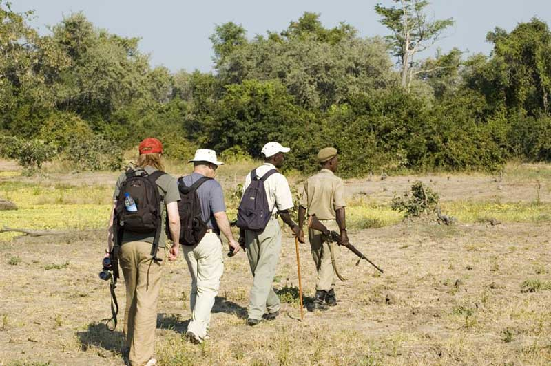 All That You Need To Know About Walking Safaris in Tanzania