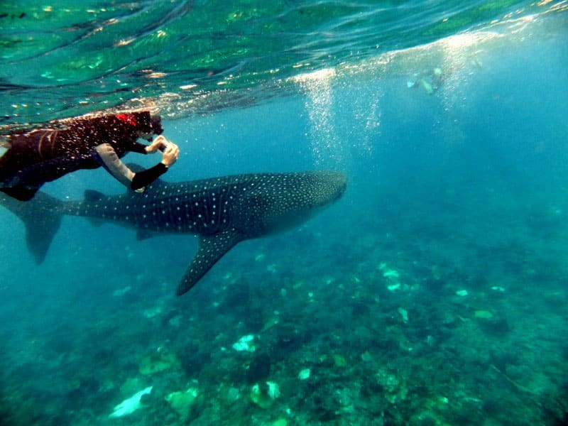 Swim with the Whale Sharks in Mafia Island