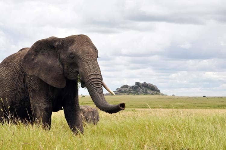 elephant in serengeti park