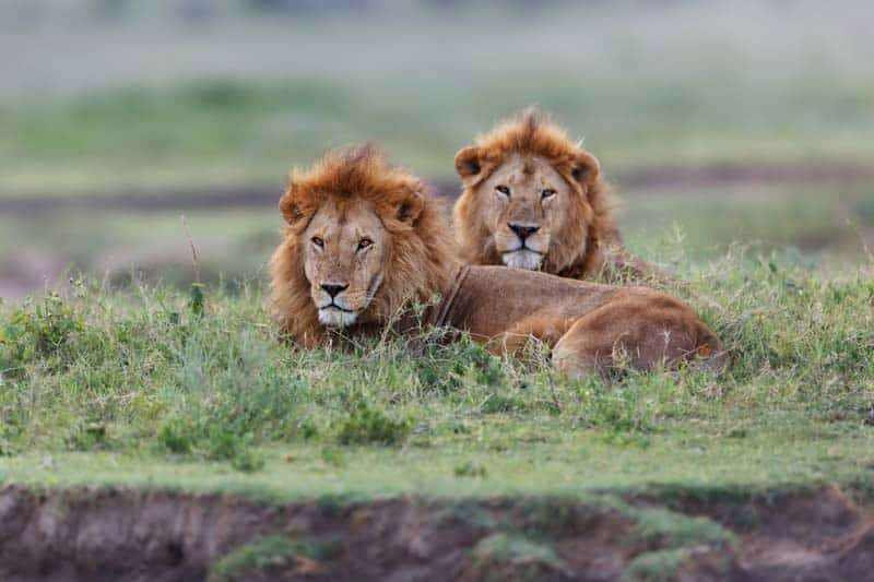 WHY BOOKING TANZANIA HOLIDAYS IS LIFE-CHANGING