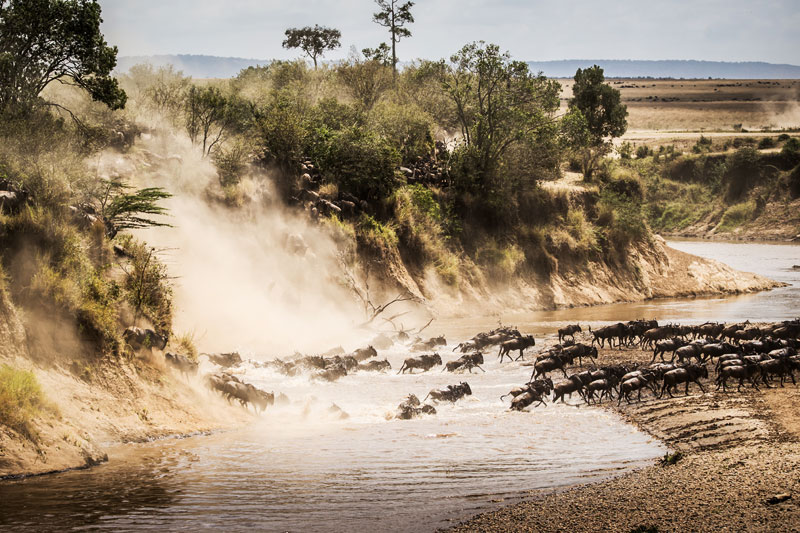 luxury migration safari tanzania