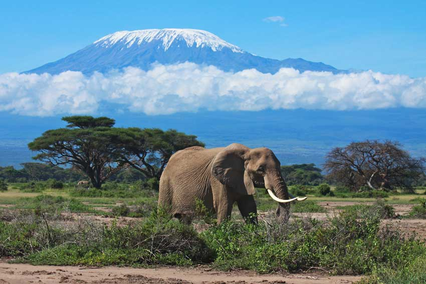 Image result for mount kilimanjaro