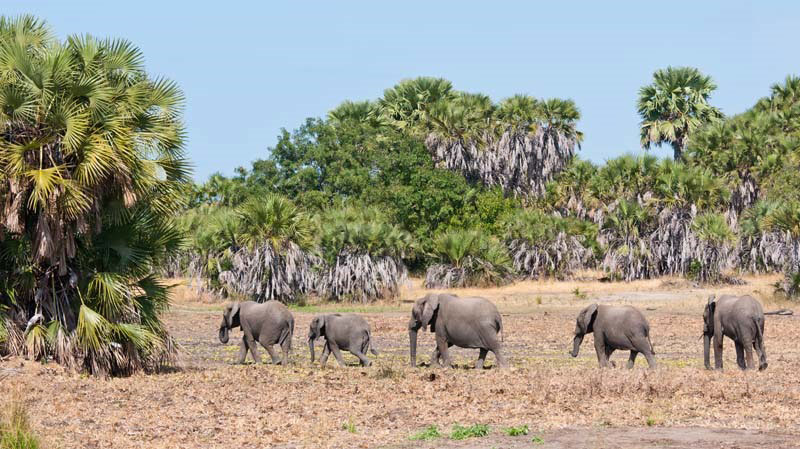 Where to Go for A Rewarding Tanzania Beach and Safari Experience