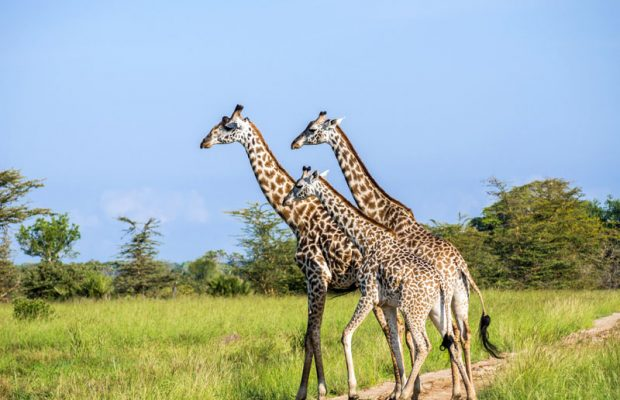 saadani safari tours