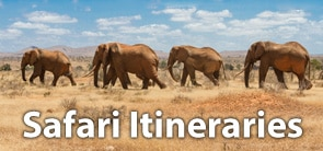 safari itineraries