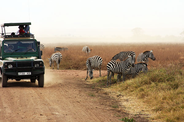 safari with zebra