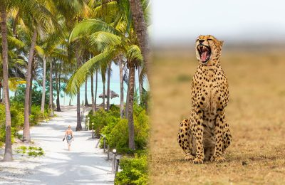 tanzania safari and zanzibar holiday package